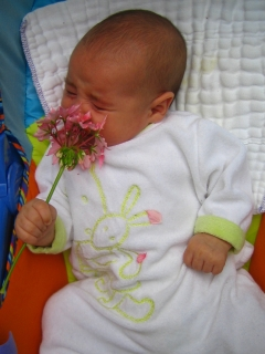 Une fleur de géranium